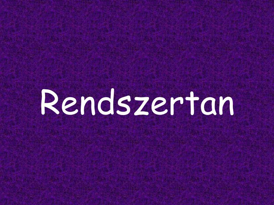 Rendszertan