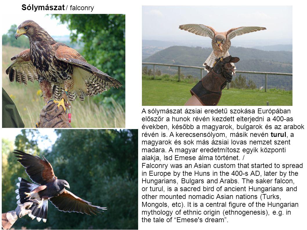 Sólymászat / falconry A sólymászat ázsiai eredetű szokása Európában előszőr a hunok révén kezdett elterjedni a 400-as években, később a magyarok, bulgarok és az arabok révén is.