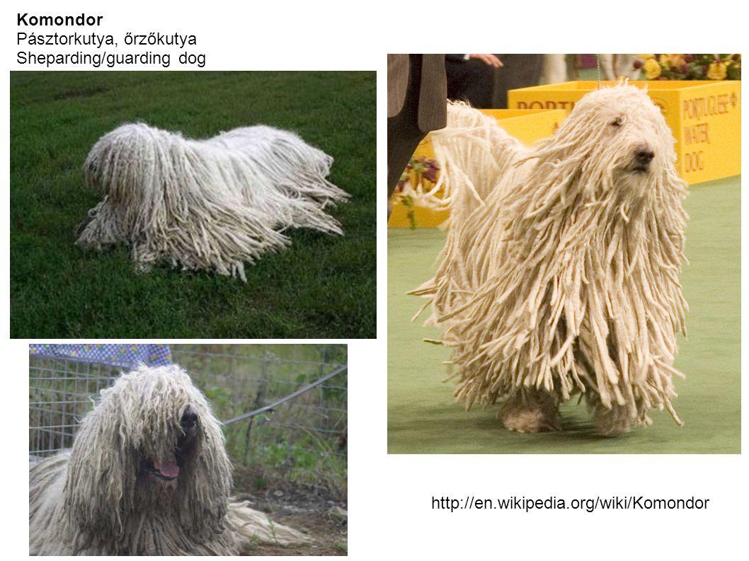Komondor Pásztorkutya, őrzőkutya Sheparding/guarding dog http://en.wikipedia.org/wiki/Komondor