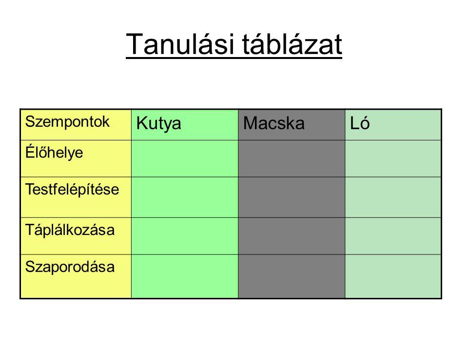 Tanulási táblázat Szempontok KutyaMacskaLó Élőhelye Testfelépítése Táplálkozása Szaporodása