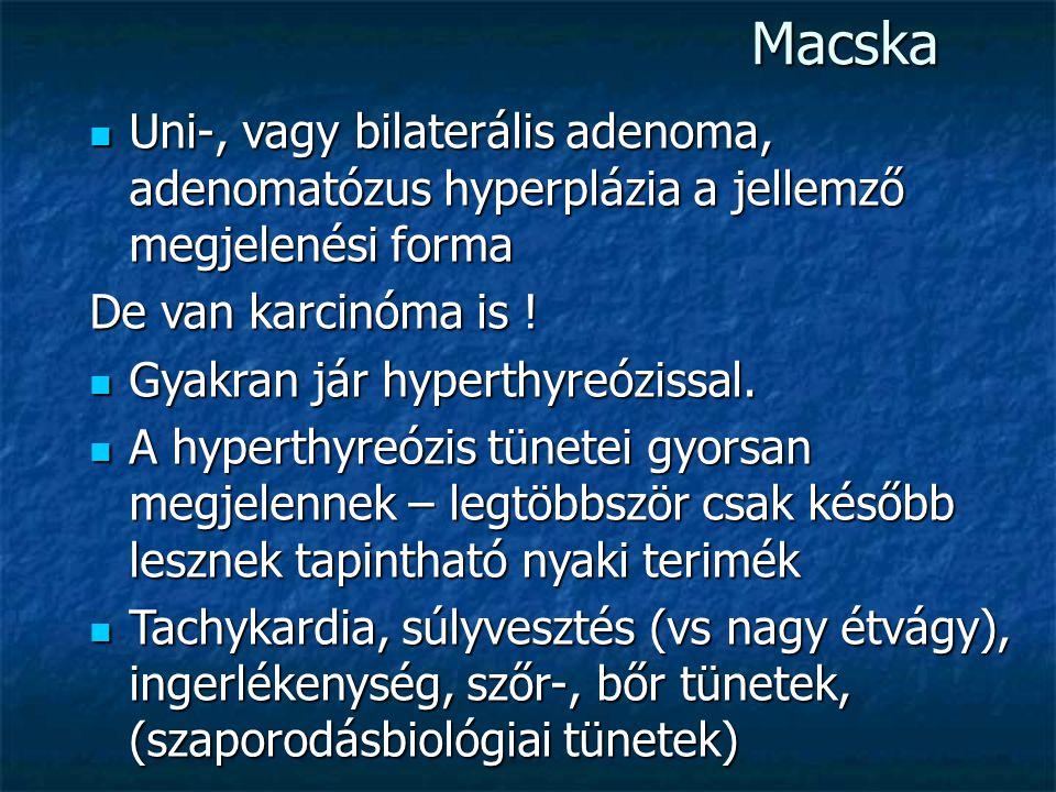 Macska Uni-, vagy bilaterális adenoma, adenomatózus hyperplázia a jellemző megjelenési forma Uni-, vagy bilaterális adenoma, adenomatózus hyperplázia a jellemző megjelenési forma De van karcinóma is .