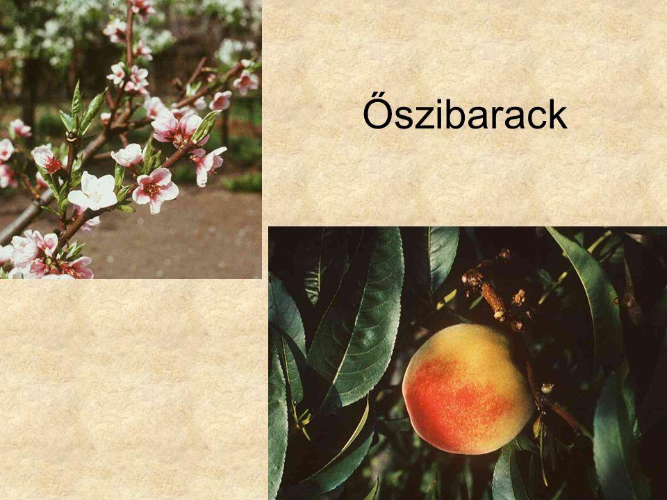 Őszibarack