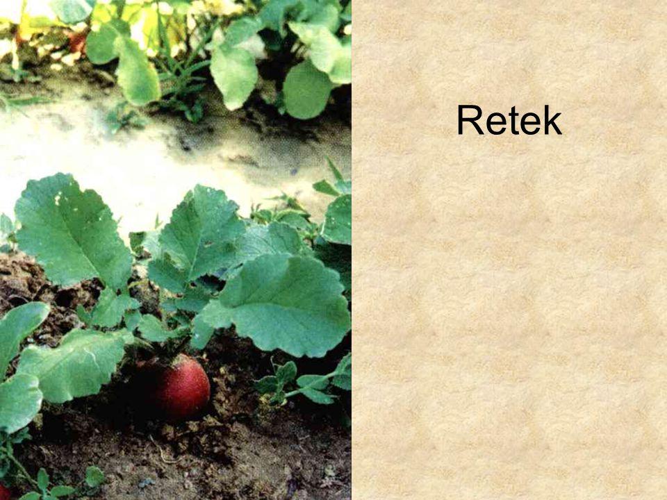 Retek