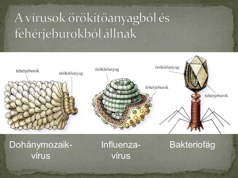 Dohánymozaik- vírus Influenza- vírus Bakteriofág