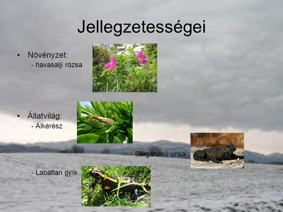 Ezeken a webcímeken tovább böngészhetsz: –http://www.dinpi.hu/http://www.dinpi.hu/ –http://www.vendegvaro.hu/Duna-Ipoly-Nemzeti-Parkhttp://www.vendegvaro.hu/Duna-Ipoly-Nemzeti-Park –http://www.foek.hu/zsibongo/termve/np/dinp.htmhttp://www.foek.hu/zsibongo/termve/np/dinp.htm –http://old.bjg.hu/kirandulas/OlgaKoPe/nemzpark/duipn p/duipnpt.htmhttp://old.bjg.hu/kirandulas/OlgaKoPe/nemzpark/duipn p/duipnpt.htm –http://www.utazzitthon.hu/duna-ipoly-nemzeti- park.htmlhttp://www.utazzitthon.hu/duna-ipoly-nemzeti- park.html