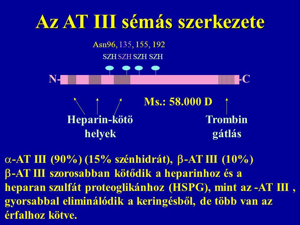 Az AT III sémás szerkezete  -AT III (90%) (15% szénhidrát),  -AT III (10%)  -AT III szorosabban kötődik a heparinhoz és a heparan szulfát proteogli