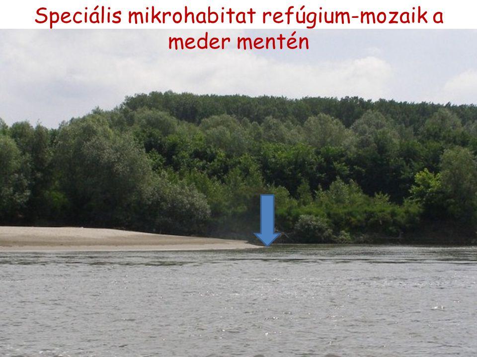 Speciális mikrohabitat refúgium-mozaik a meder mentén