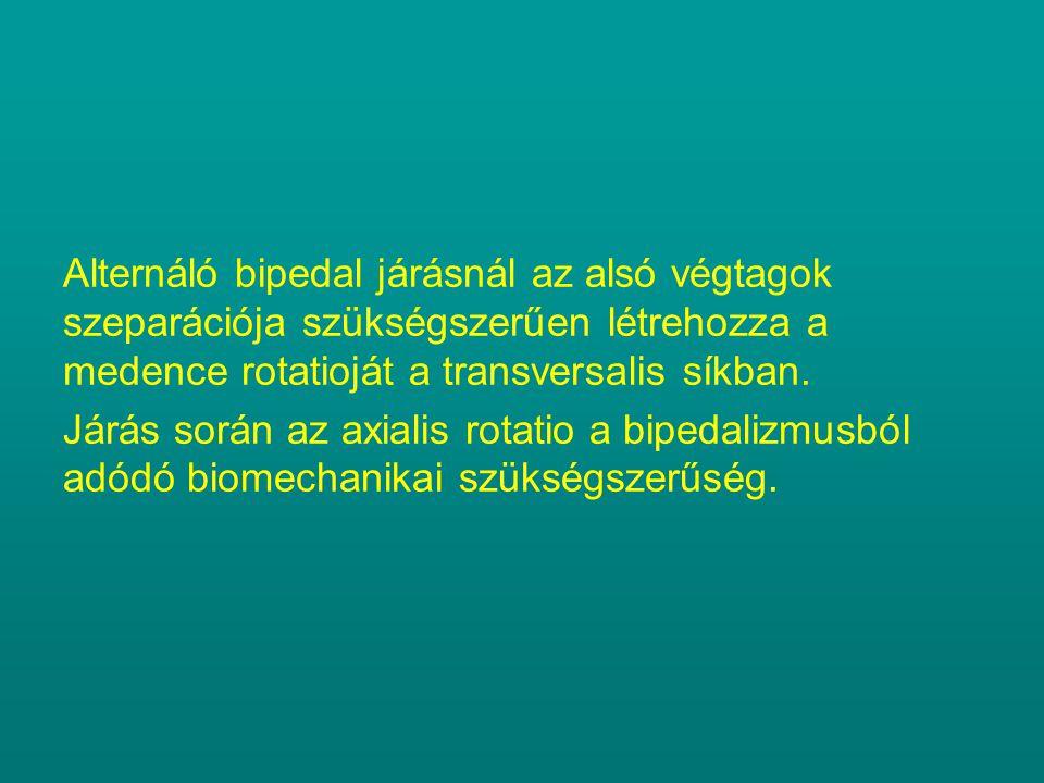 Alternáló bipedal járásnál az alsó végtagok szeparációja szükségszerűen létrehozza a medence rotatioját a transversalis síkban. Járás során az axialis