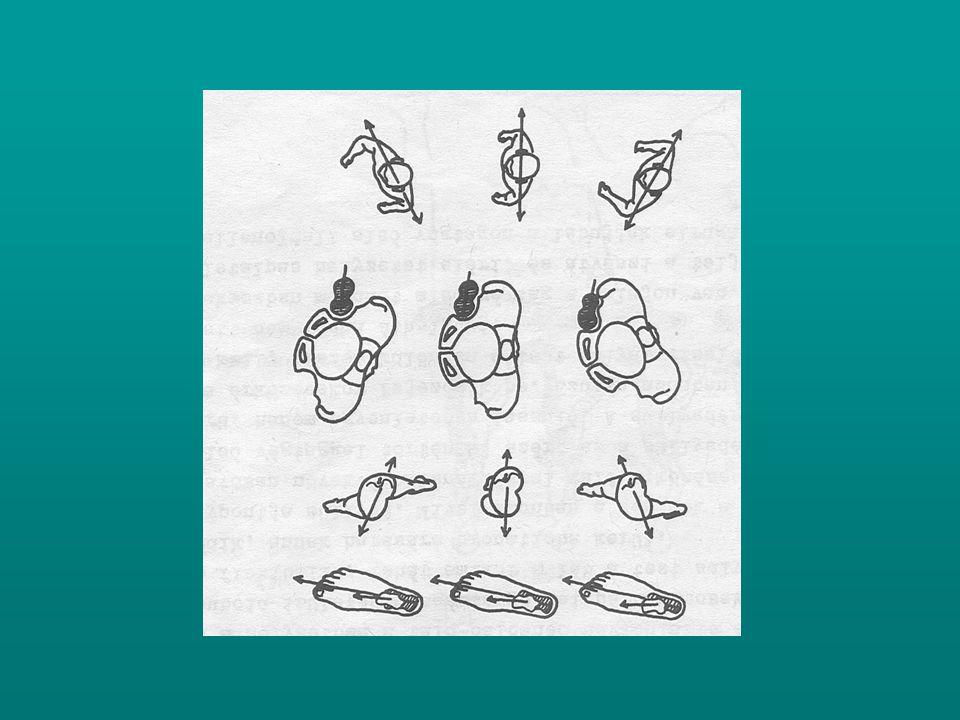 A medence rotatiojának forgástengelyéül a súlyt viselő AV szolgál, a csípőízület mozgásai determinálják a distális forgásokat.