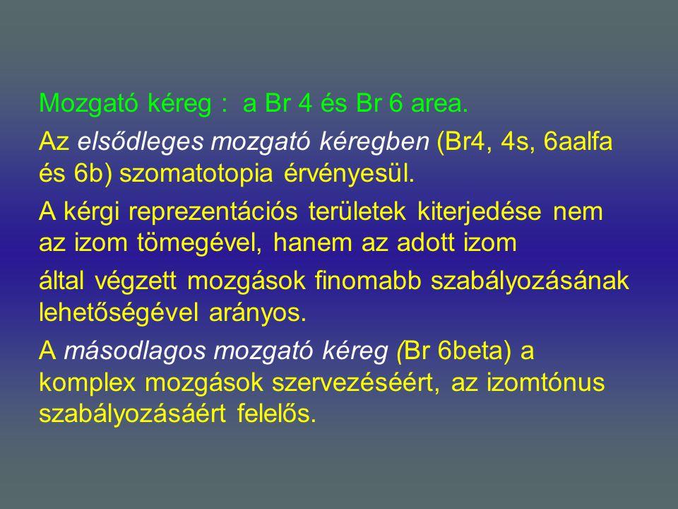 Mozgató kéreg : a Br 4 és Br 6 area. Az elsődleges mozgató kéregben (Br4, 4s, 6aalfa és 6b) szomatotopia érvényesül. A kérgi reprezentációs területek