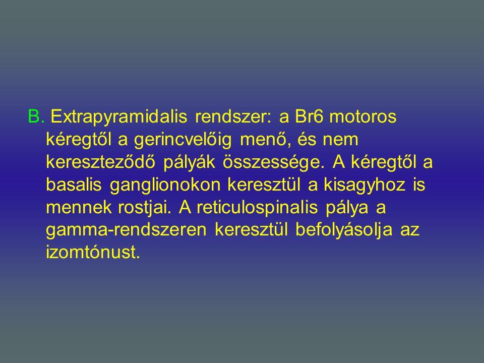 B. Extrapyramidalis rendszer: a Br6 motoros kéregtől a gerincvelőig menő, és nem kereszteződő pályák összessége. A kéregtől a basalis ganglionokon ker