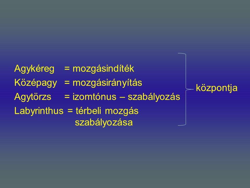 Agykéreg = mozgásindíték Középagy = mozgásirányítás Agytörzs = izomtónus – szabályozás Labyrinthus = térbeli mozgás szabályozása központja