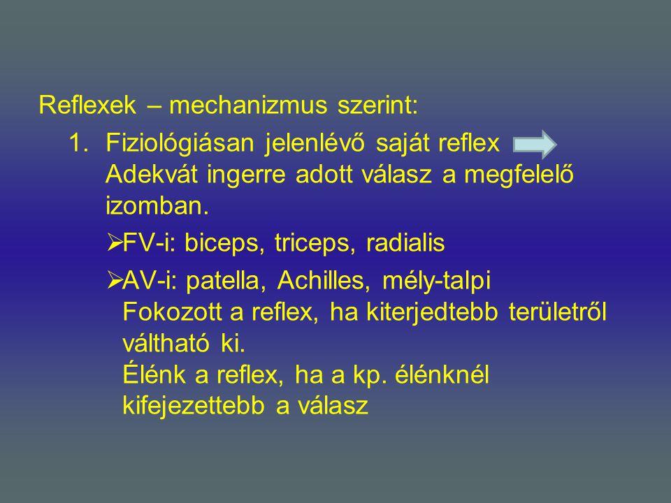 Reflexek – mechanizmus szerint: 1.Fiziológiásan jelenlévő saját reflex Adekvát ingerre adott válasz a megfelelő izomban.  FV-i: biceps, triceps, radi