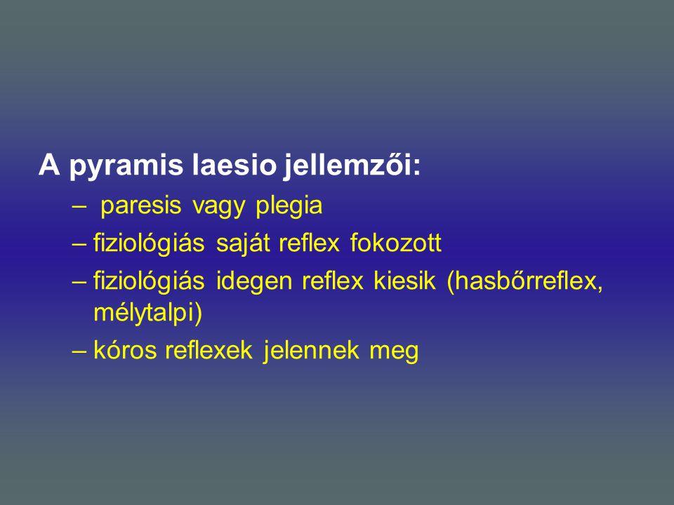A pyramis laesio jellemzői: – paresis vagy plegia –fiziológiás saját reflex fokozott –fiziológiás idegen reflex kiesik (hasbőrreflex, mélytalpi) –kóro