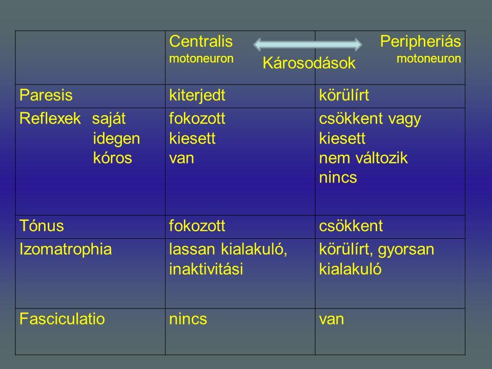 Centralis motoneuron Peripheriás motoneuron Paresiskiterjedtkörülírt Reflexek saját idegen kóros fokozott kiesett van csökkent vagy kiesett nem változ