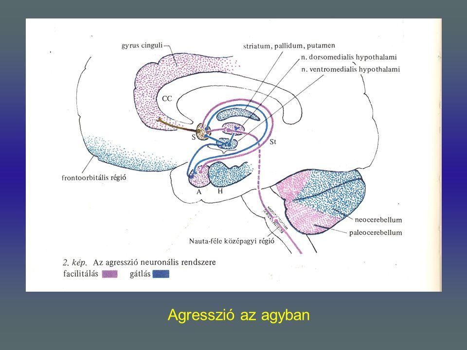 Agresszió az agyban