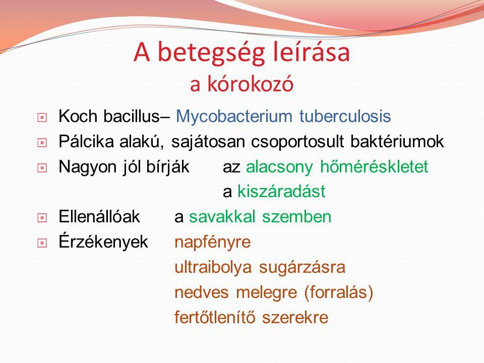 A betegség leírása a kórokozó  Koch bacillus– Mycobacterium tuberculosis  Pálcika alakú, sajátosan csoportosult baktériumok  Nagyon jól bírjákaz alacsony hőméréskletet a kiszáradást  Ellenállóaka savakkal szemben  Érzékenyek napfényre ultraibolya sugárzásra nedves melegre (forralás) fertőtlenítő szerekre