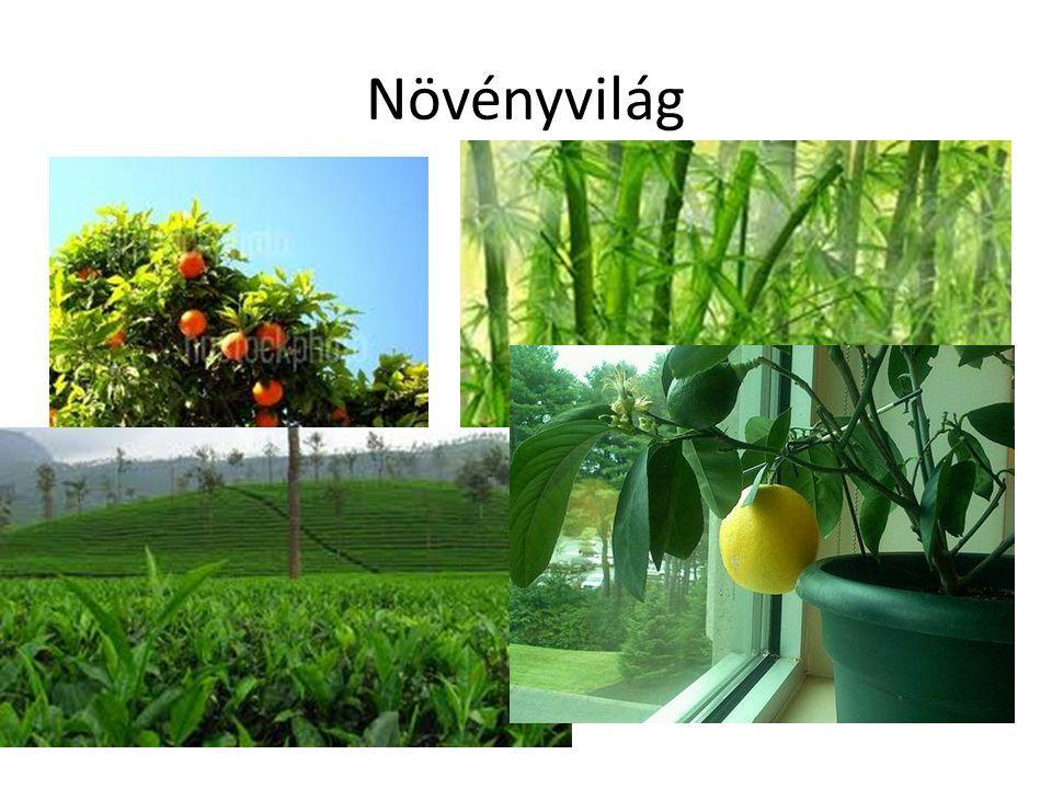 Növényvilág