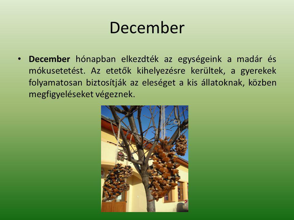 December December hónapban elkezdték az egységeink a madár és mókusetetést.
