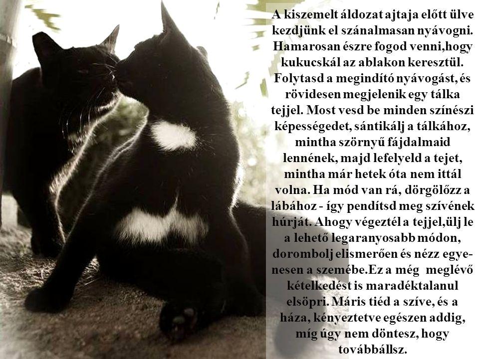 A macskák azt akarják megtanítani nekünk, hogy az életben nincs mindennek funkciója.