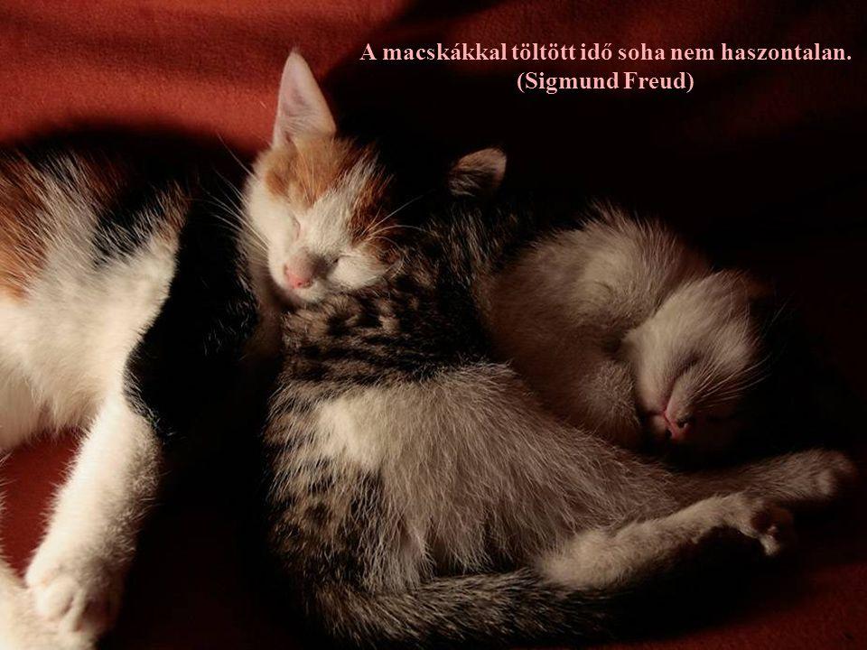 Túljárni egy macska eszén, aki nem akar befáradni a házba - ez bizony felér egy sakkfeladvánnyal. (Dominic Courcel)