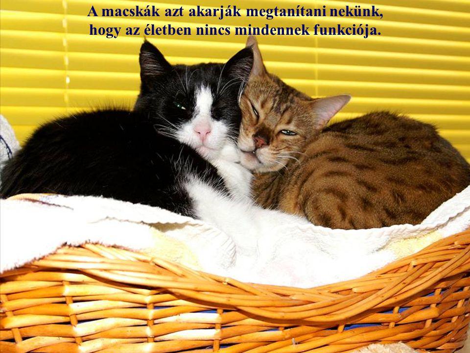 A macskákkal töltött idő soha nem haszontalan. (Sigmund Freud)