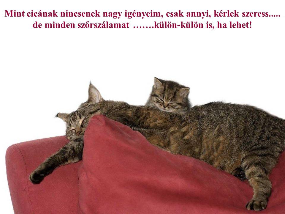 Most kaptam egy nagyon ragaszkodó perzsa cicát, az ő verziója az, hogy ő kapott engem. (E. Underhill)