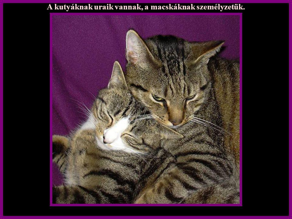 Mint cicának nincsenek nagy igényeim, csak annyi, kérlek szeress..... de minden szőrszálamat …….külön-külön is, ha lehet!
