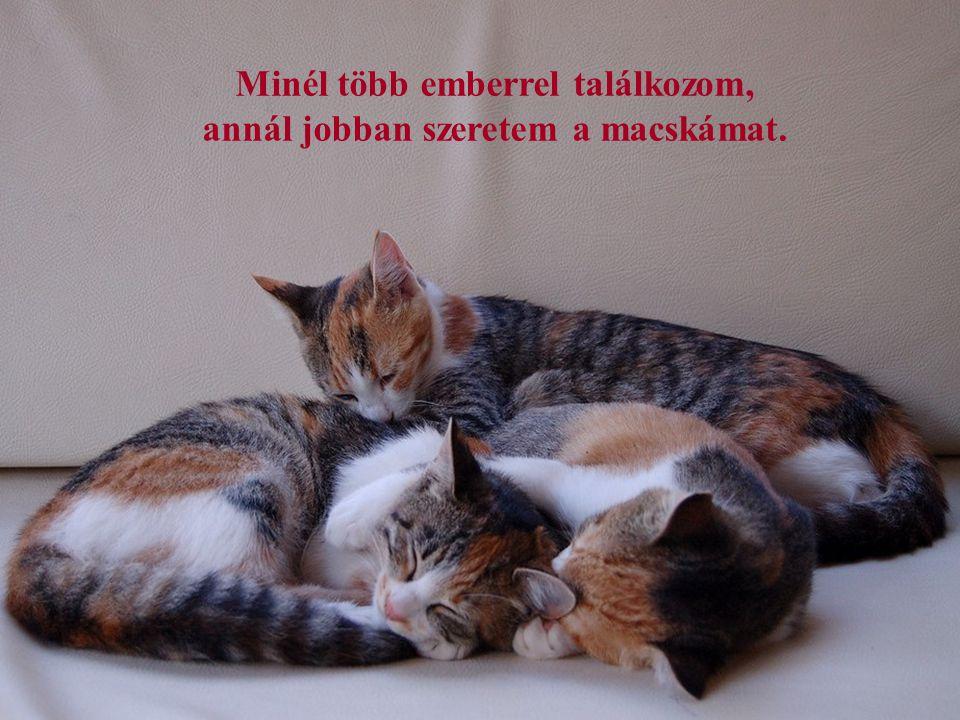 A macska csupan technikai értelemben állat, egyébként egy istenség. (Robert Lynd)