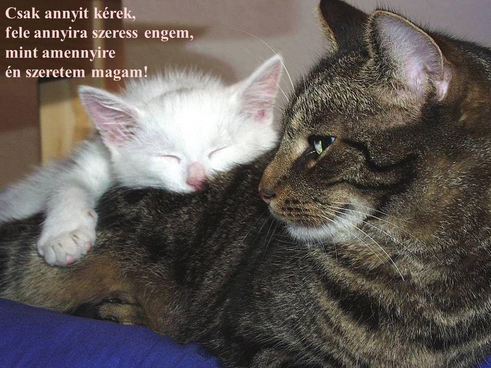 A szelektív hallás macska törvénye
