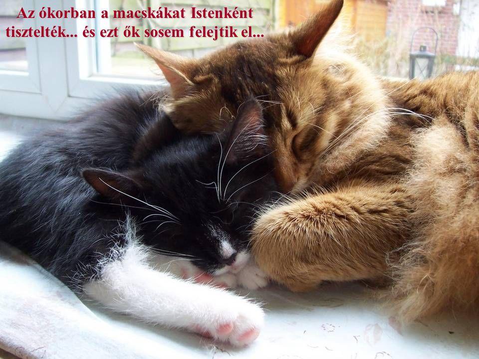 Az ókorban a macskákat Istenként tisztelték... és ezt ők sosem felejtik el...
