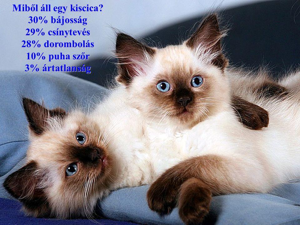 Miből áll egy kiscica? 30% bájosság 29% csínytevés 28% dorombolás 10% puha szőr 3% ártatlanság