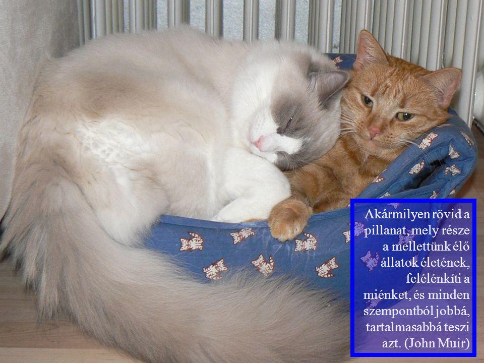 Két macska ül a háztetőn.Megszólal az egyik: - Te mit kérsz karácsonyra.