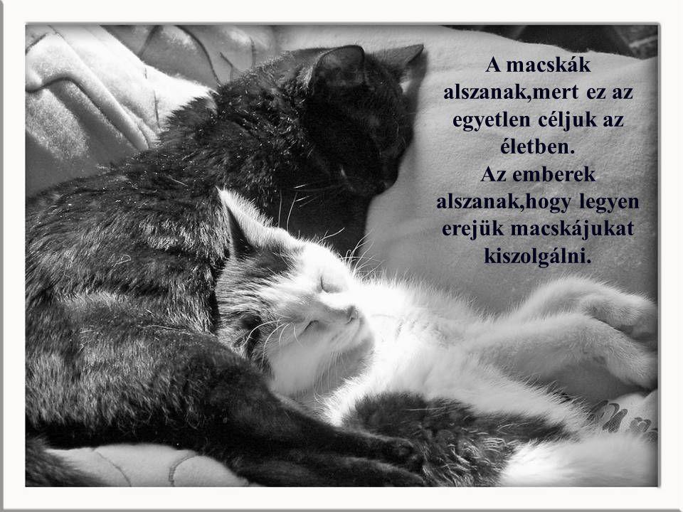 A macskák alszanak,mert ez az egyetlen céljuk az életben.