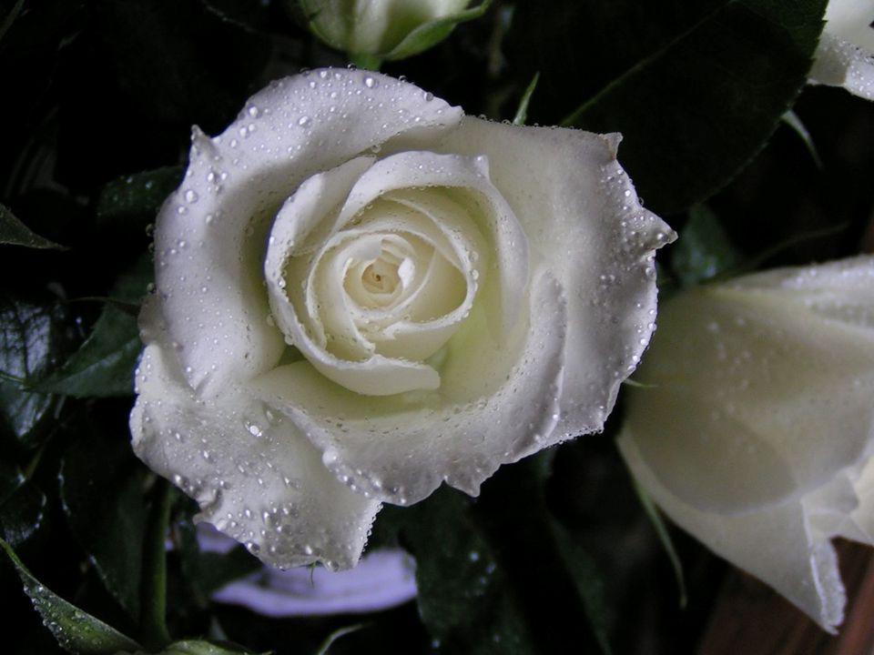 A SZERETET Egyszerűen eggyütt lenni, nem csak testileg hanem lelkileg is: ez a szeretet...