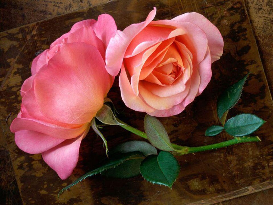 A Szeretet ű az nem a nagy nyilatkozatok, hanem egyszerű dolgok ok nélküli cselekedetei....