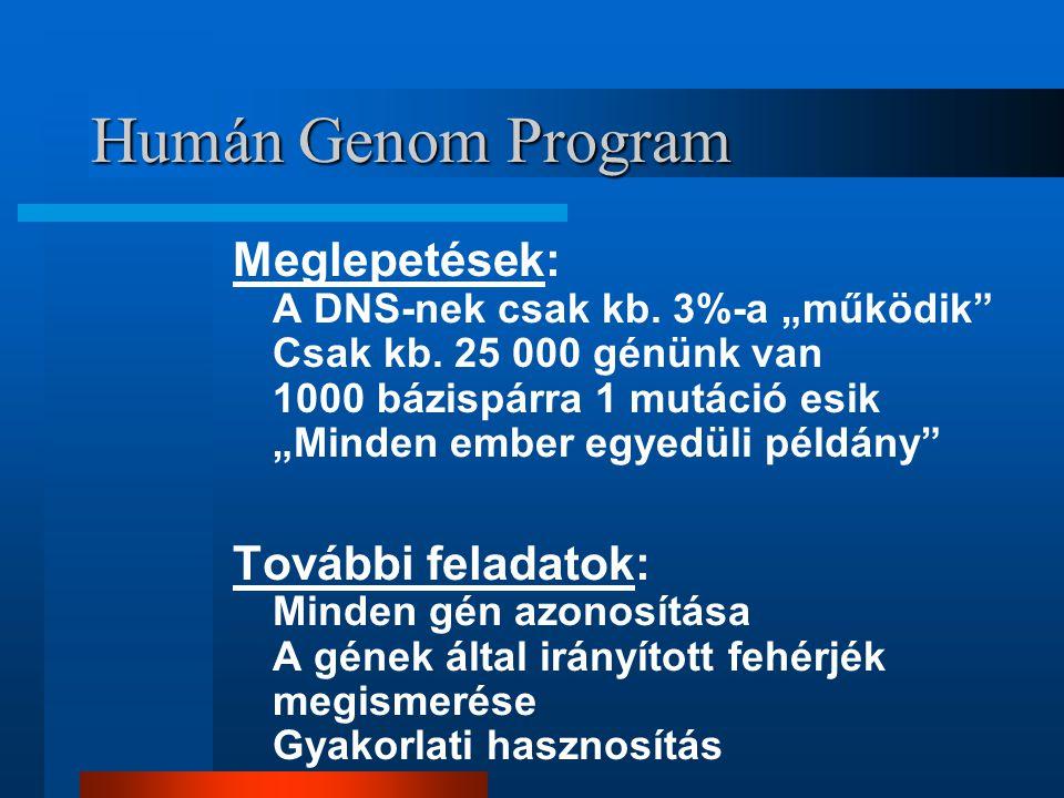 """Humán Genom Program Meglepetések: A DNS-nek csak kb. 3%-a """"működik"""" Csak kb. 25 000 génünk van 1000 bázispárra 1 mutáció esik """"Minden ember egyedüli p"""