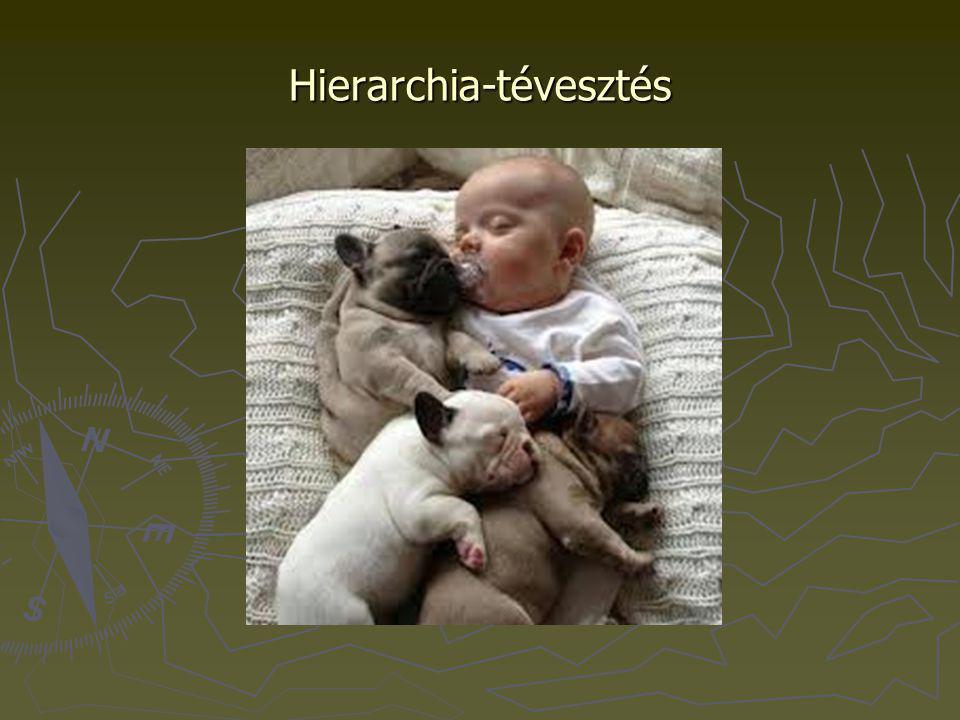 Hierarchia-tévesztés