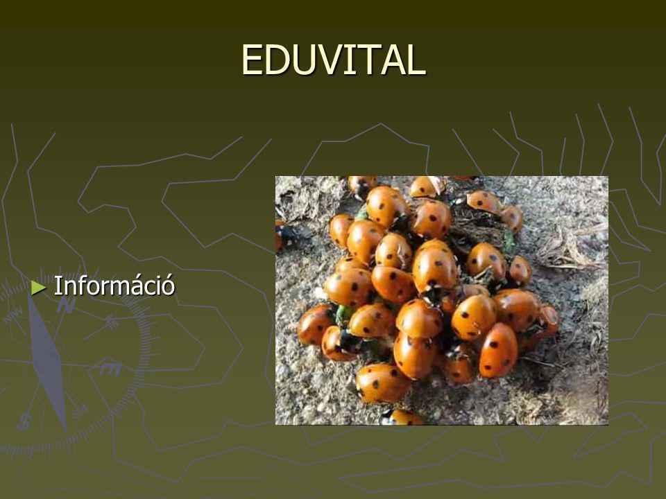 EDUVITAL ► Információ