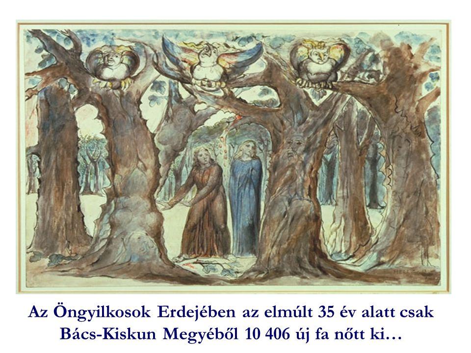 Az Öngyilkosok Erdejében az elmúlt 35 év alatt csak Bács-Kiskun Megyéből 10 406 új fa nőtt ki…
