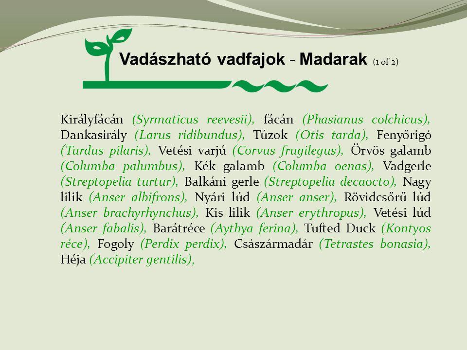 Vadászható vadfajok - Madarak (1 of 2) Királyfácán (Syrmaticus reevesii), fácán (Phasianus colchicus), Dankasirály (Larus ridibundus), Túzok (Otis tar