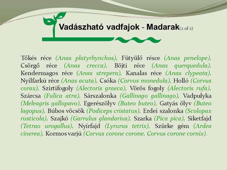 Vadászható vadfajok - Madarak (2 of 2) Tőkés réce (Anas platyrhynchos), Fütyülő résce (Anas penelope), Csörgő réce (Anas crecca), Böjti réce (Anas que