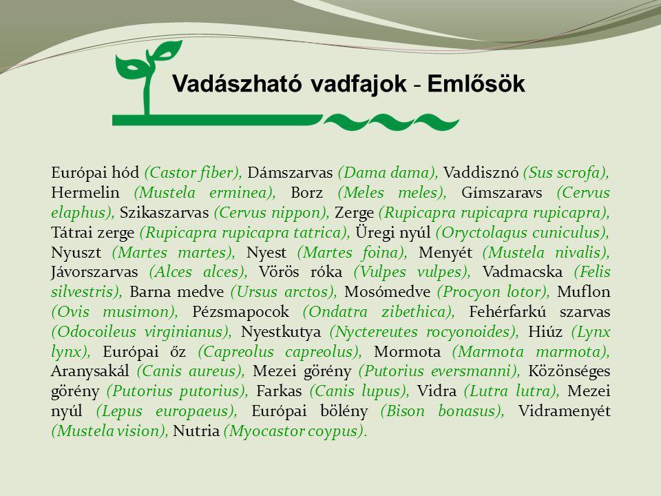 Vadászható vadfajok - Emlősök Európai hód (Castor fiber), Dámszarvas (Dama dama), Vaddisznó (Sus scrofa), Hermelin (Mustela erminea), Borz (Meles mele