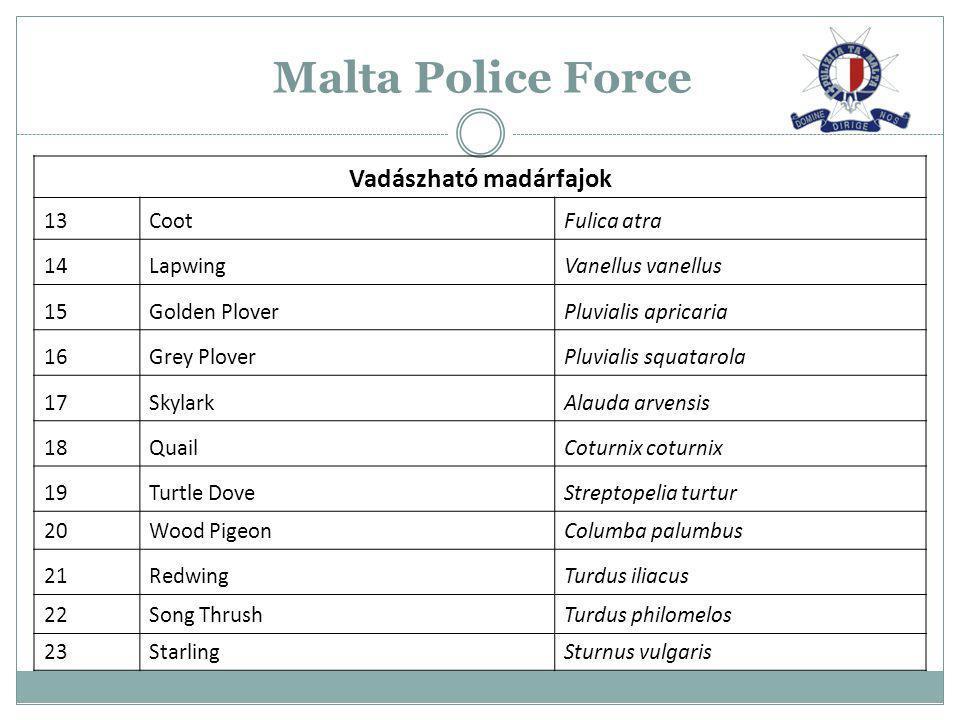 Malta Police Force Vadászható madárfajok 13CootFulica atra 14LapwingVanellus vanellus 15Golden PloverPluvialis apricaria 16Grey PloverPluvialis squata