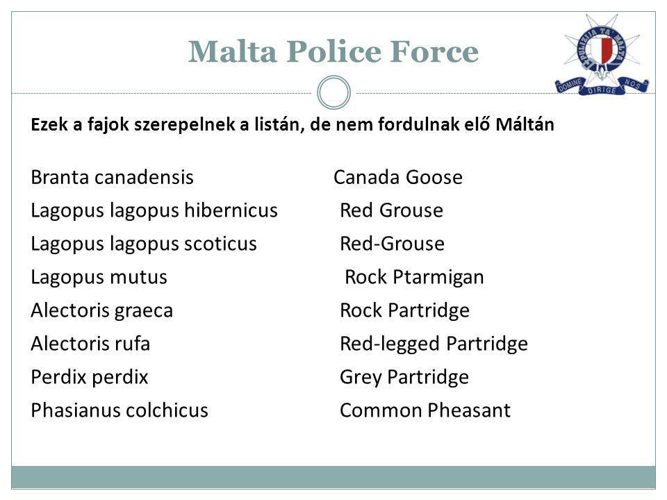 Malta Police Force Ezek a fajok szerepelnek a listán, de nem fordulnak elő Máltán Branta canadensis Canada Goose Lagopus lagopus hibernicus Red Grouse