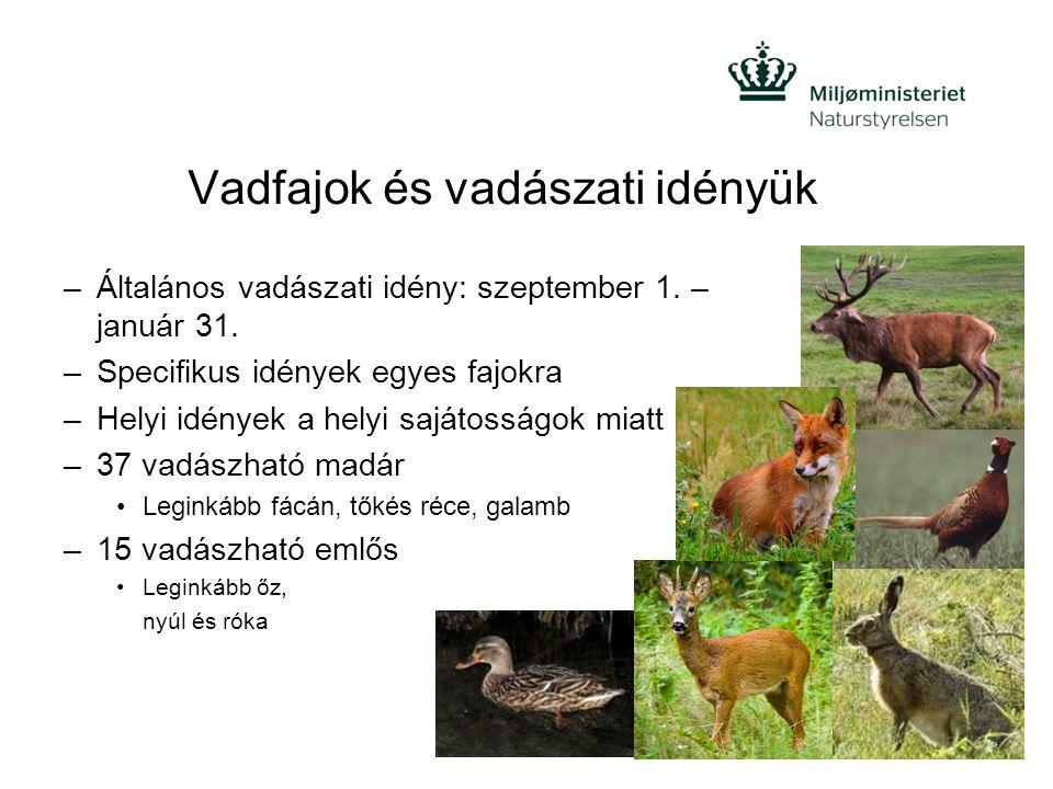 Vadfajok és vadászati idényük –Általános vadászati idény: szeptember 1. – január 31. –Specifikus idények egyes fajokra –Helyi idények a helyi sajátoss