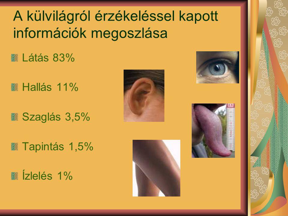 A külvilágról érzékeléssel kapott információk megoszlása Látás 83% Hallás 11% Szaglás 3,5% Tapintás 1,5% Ízlelés 1%
