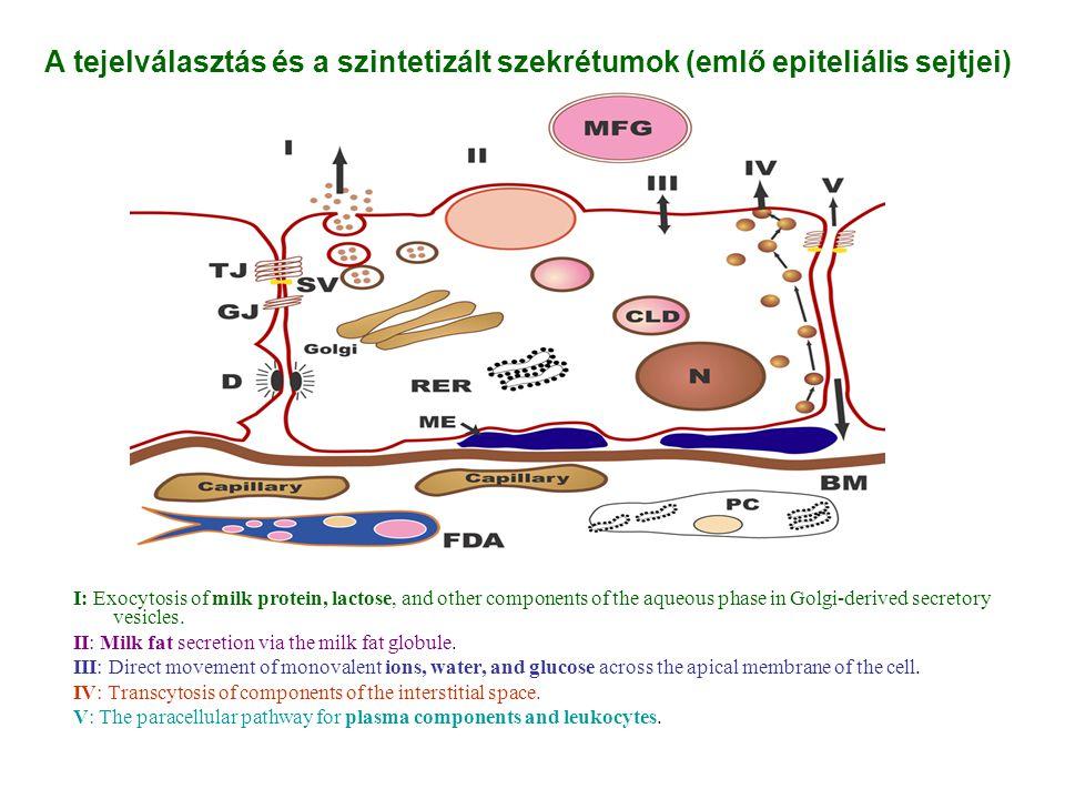 """strukturális funkció: védő funkció: A normál bélflóra fő """"szerepei metabolikus funkció: Adapted with permission from O Hara."""