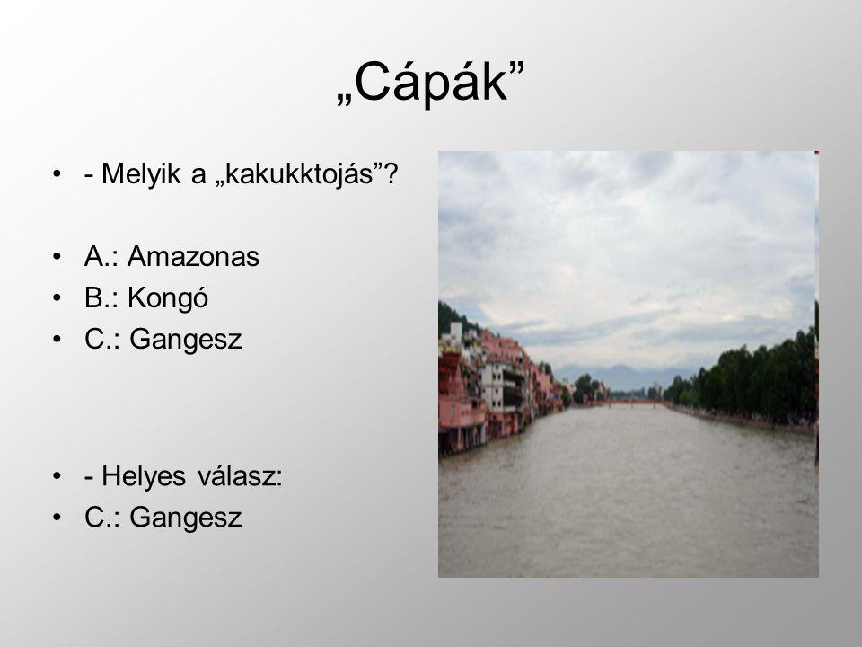 """- Melyik a """"kakukktojás ? A.: Amazonas B.: Kongó C.: Gangesz - Helyes válasz: C.: Gangesz"""