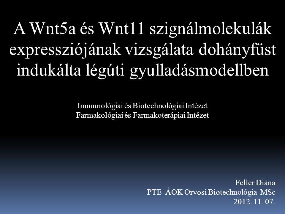 A Wnt5a és Wnt11 szignálmolekulák expressziójának vizsgálata dohányfüst indukálta légúti gyulladásmodellben Immunológiai és Biotechnológiai Intézet Farmakológiai és Farmakoterápiai Intézet Feller Diána PTE ÁOK Orvosi Biotechnológia MSc 2012.